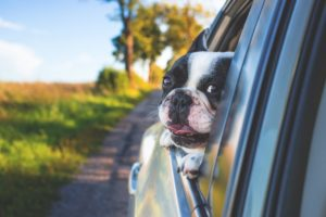 Leaving Pets in Cars